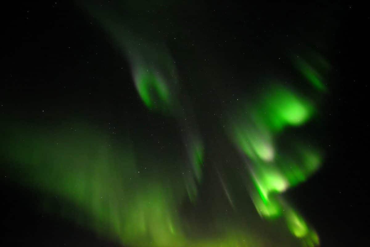 aurora resembles parrot